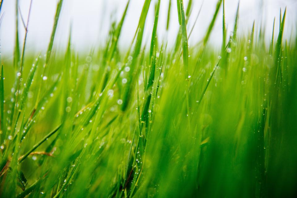 nature, grass, rain, drops, water, droplets, sky, still, bokeh, green