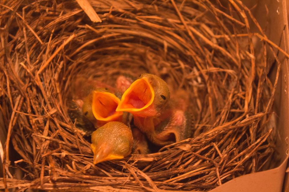 bird, beak, feather, animal, fly, baby, nest