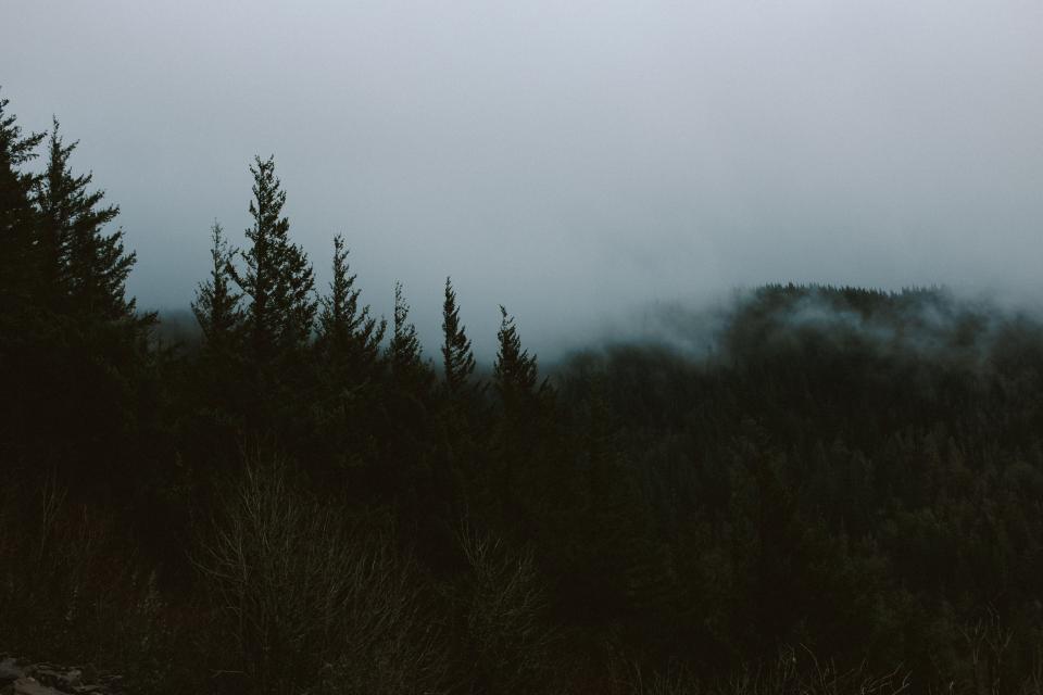 forest, woods, wildlife, dark, camping, vacation, trip, adventure, fog