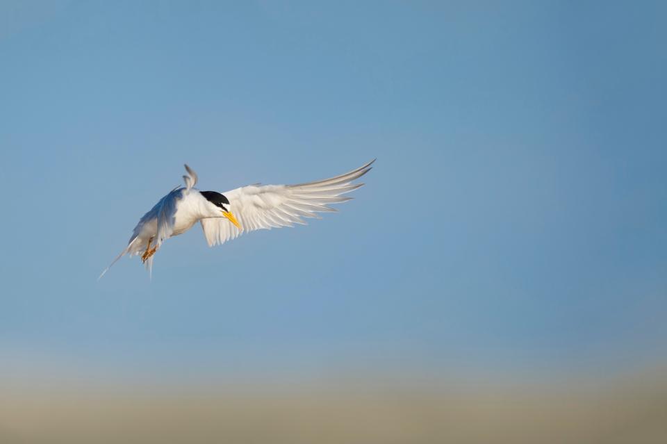 bird, flying, animal, blue, sky