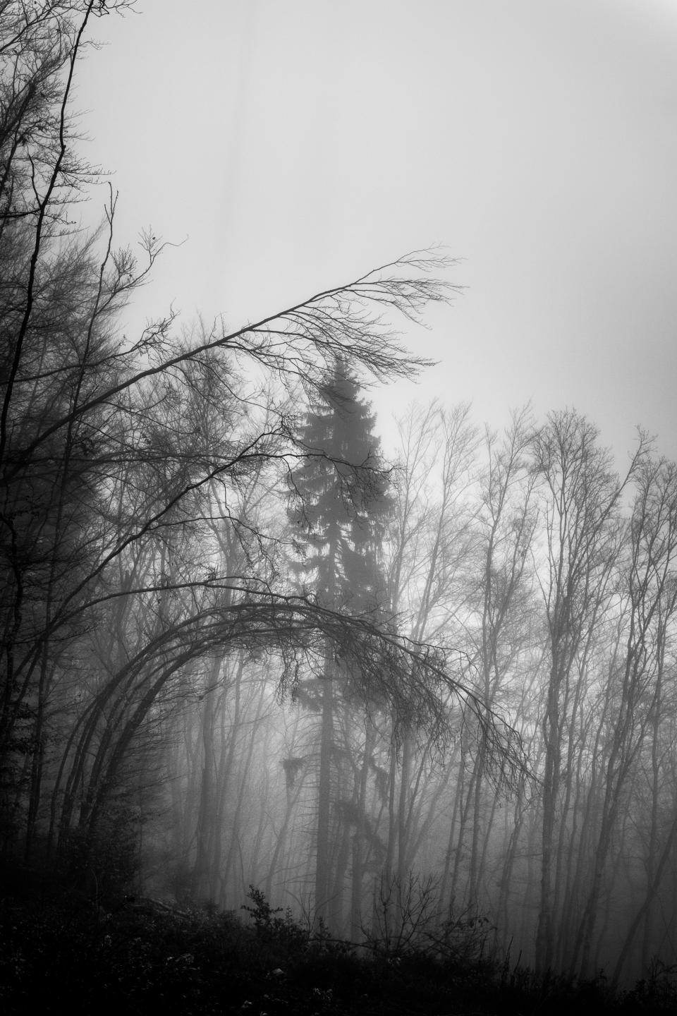 black and white, trees, plant, forest, nature, raining, storm, sky