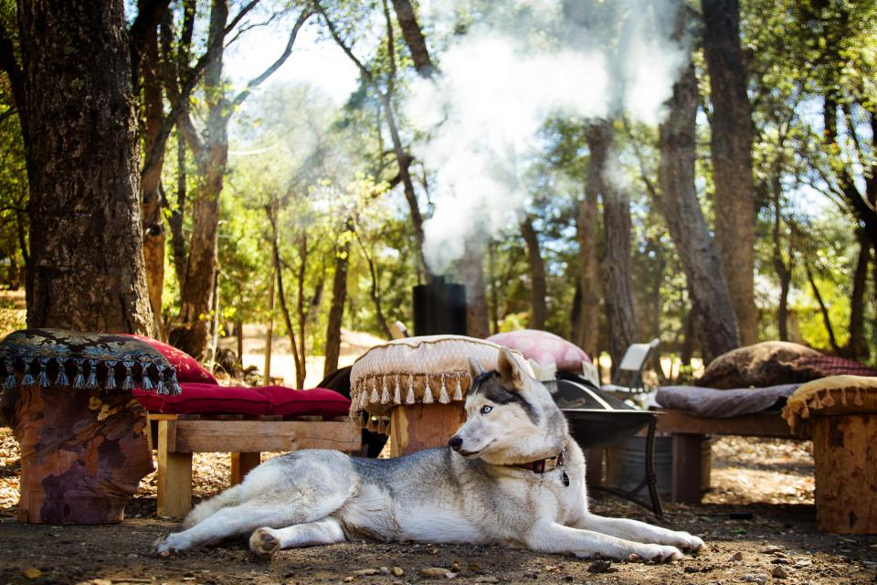 dog husky pet animal pillows wood benches trees forest woods smoke nature