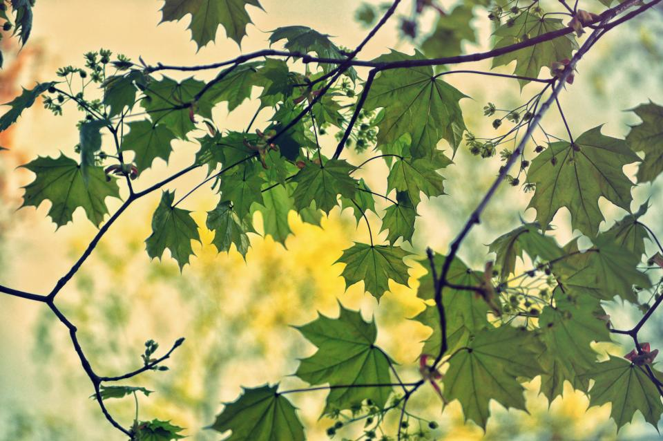 nature, trees, branches, leaves, flowers, sky, light, summer, spring, still, bokeh