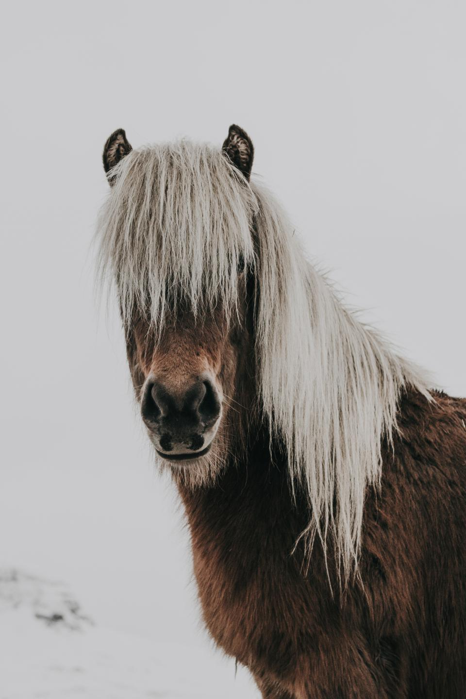 horse, animal, brown, white, snow, winter, cold, weather, hair