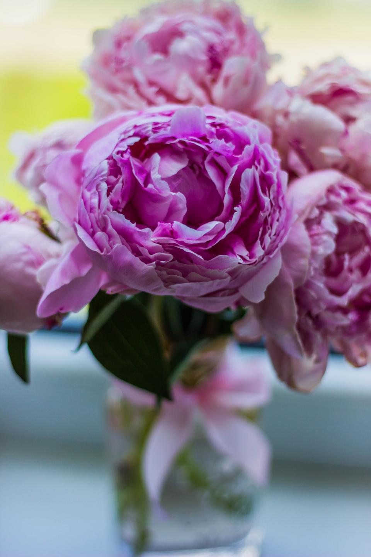 pink, flower, bloom, petal, leaf plant, nature, green, blur, vase