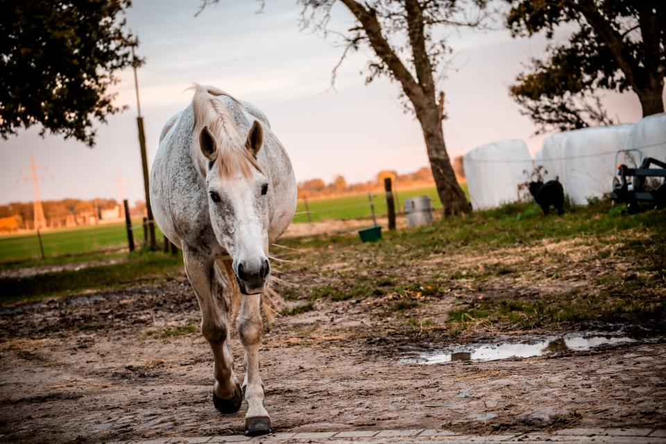 horse, pet, animal, ground, outdoor, nature, tree, green, grass, field, sky, farm