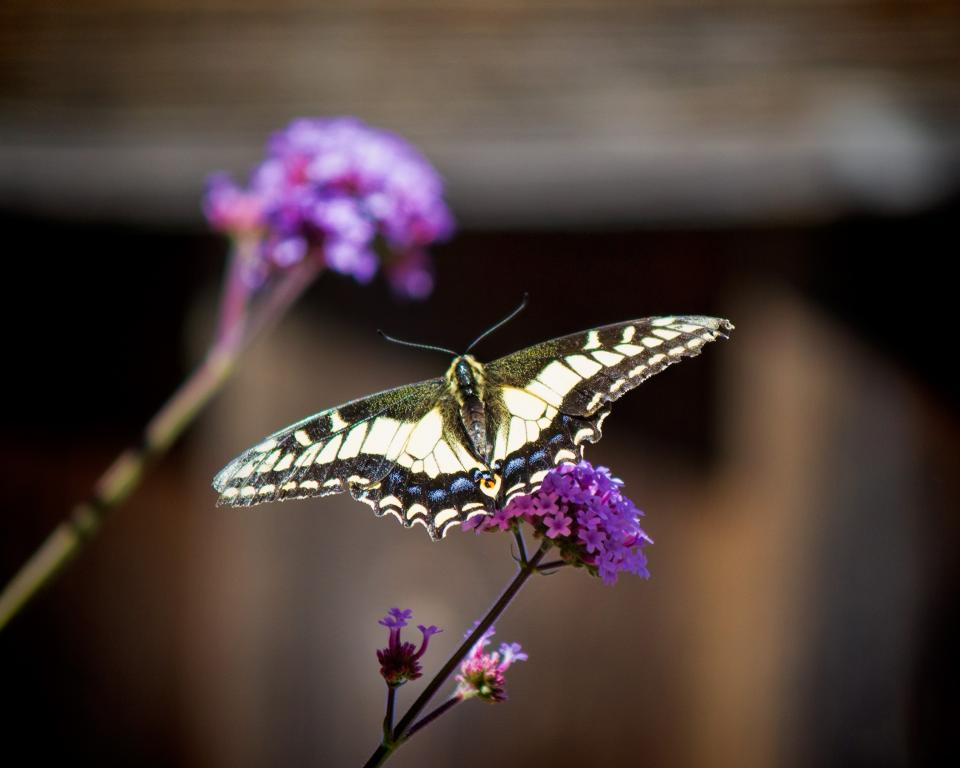 butterfly, insect, purple, flower, nature, plant, blur, garden