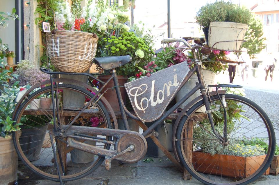 bike, bicycle, flower, plants, nature, pot, basket