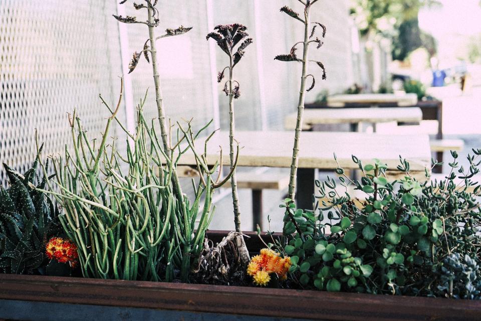 flowers, plants, flower pot, planter