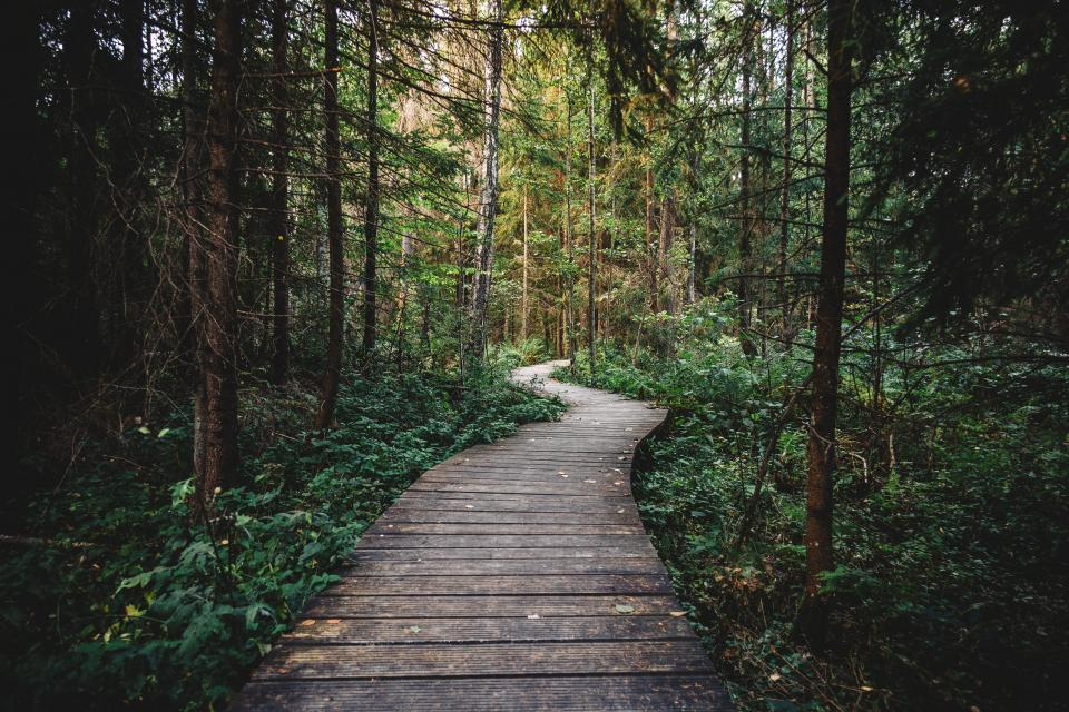 forest woods trees nature path trail hiking trekking adventure outdoors wood bushes leaves