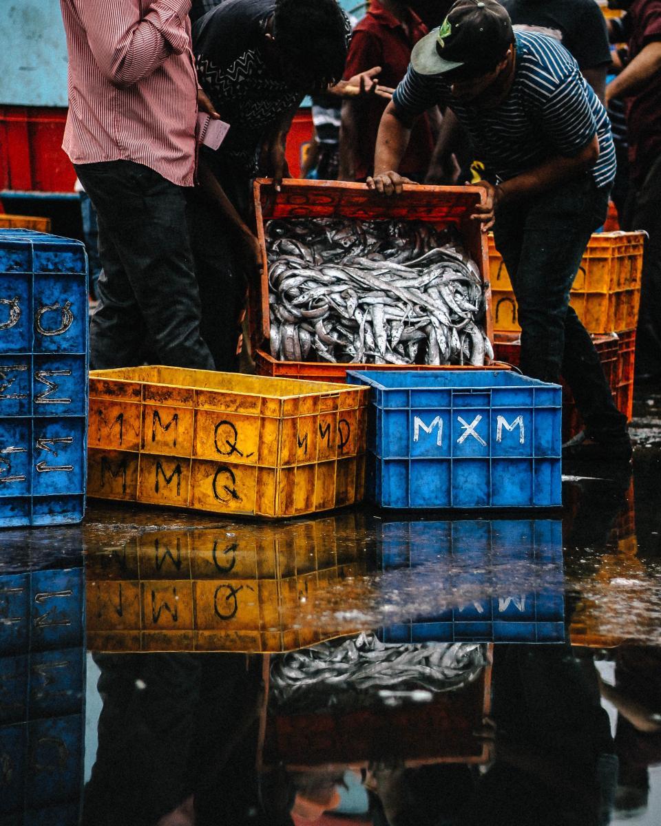 fish, fishing, crate, barrel, wharf, seaport, water, people, men, fishermen