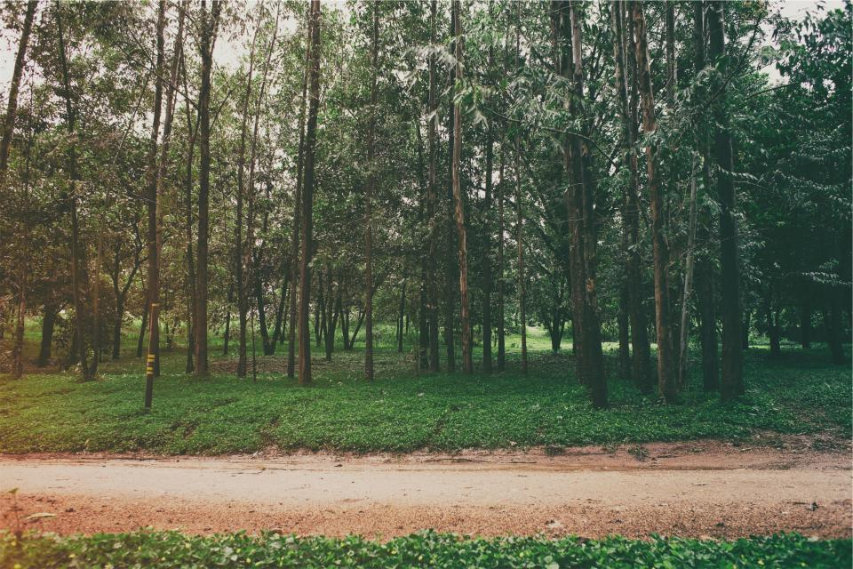 park trees grass path dirt