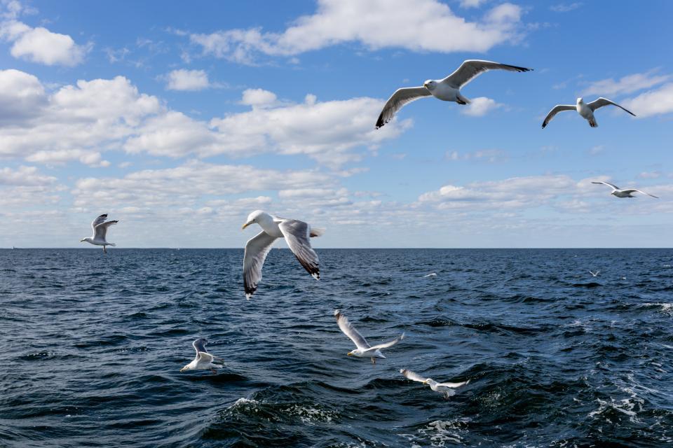 sea, ocean, blue, water, waves, nature, bird, flying, animal, horizon, clouds, sky