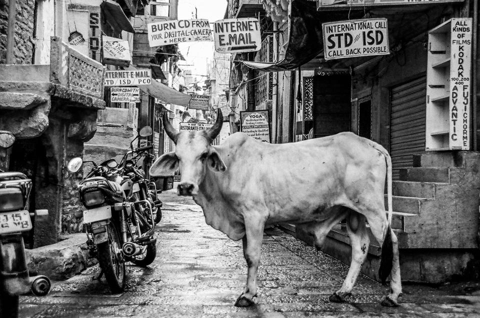 architecture, building, infrastructure, black and white, cow, animal, pet, motorcycle, poster, alley