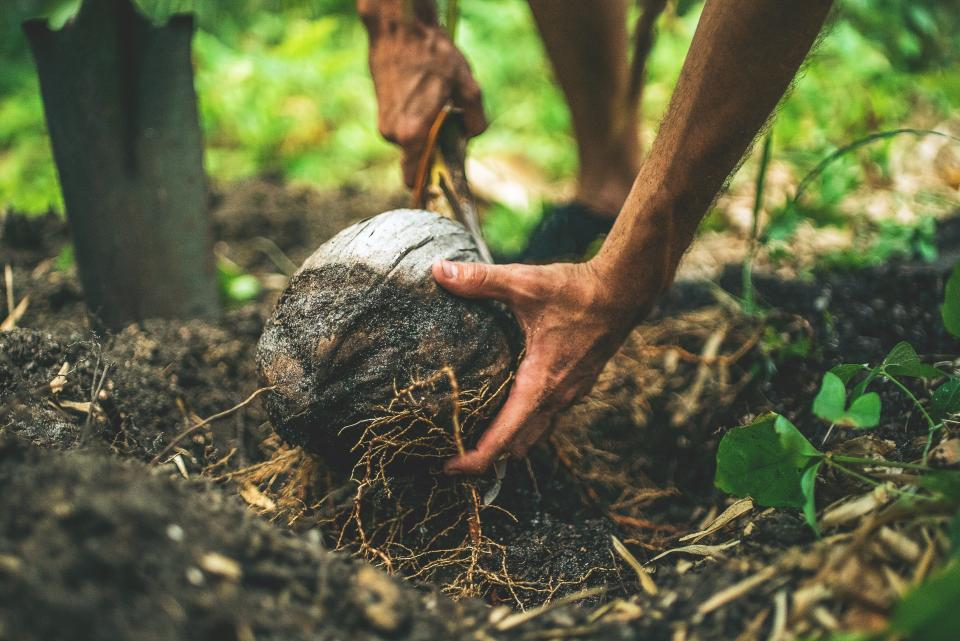 soil land environment nature coconut plants roots outdoor people man