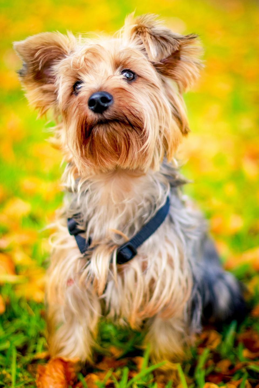 dog, animal, pet, puppy, green, grass, playground