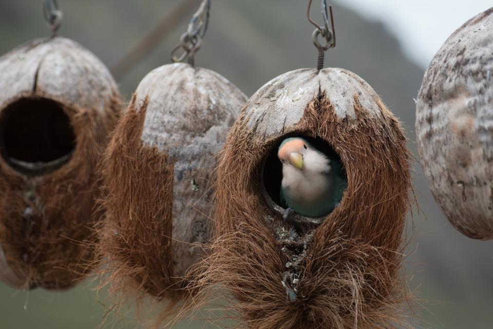 birds fly animals nest beak