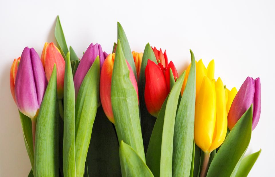 green, leaf, colorful, flowers, tulip, nature, plants