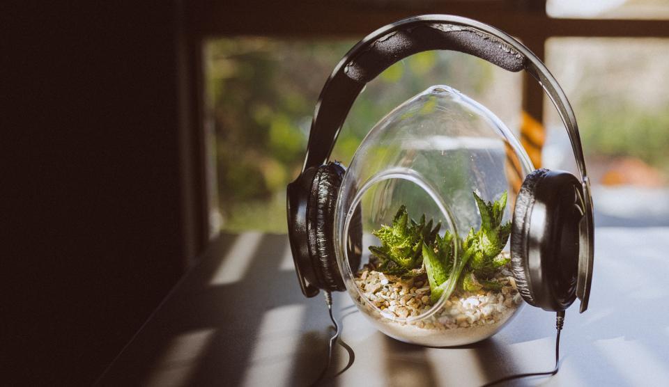 headphones peaceful plant green leaves music song vase