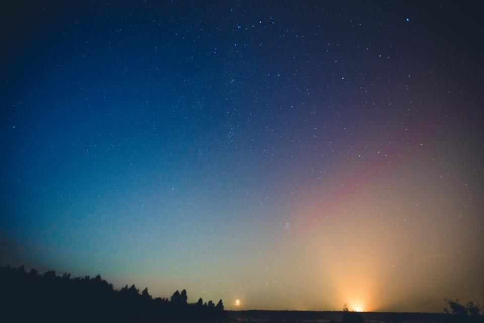 night sky stars galaxies trees plant silhouette