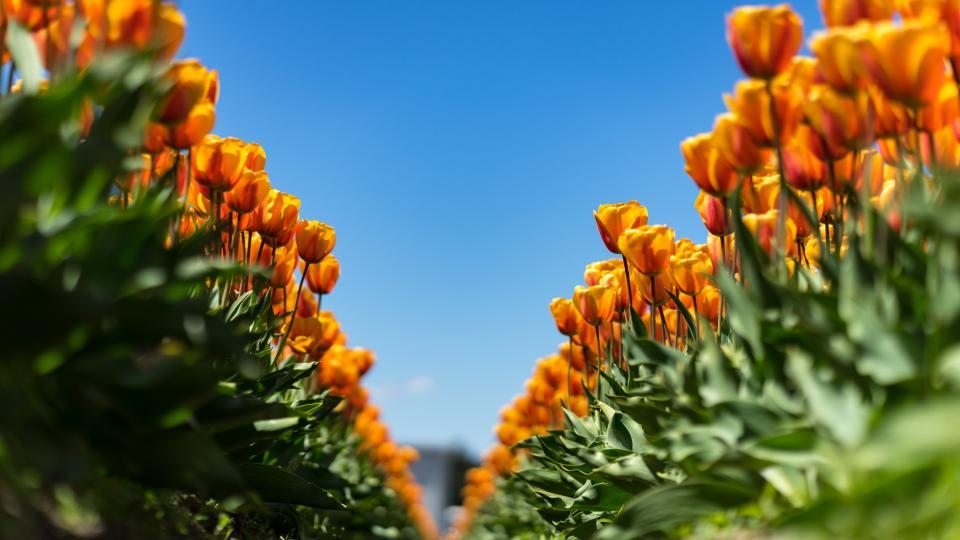 flower bloom blossoms petal nature plant green leaf garrden sunny day summer blue sky outdoor farm field