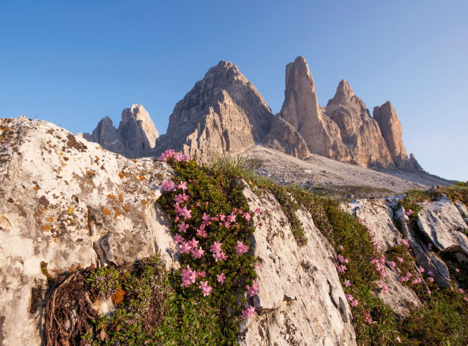nature, landscape, mountain, flowers, bloom, autumn, fall, pink, green, leaves, grass, travel, adventure, cliff