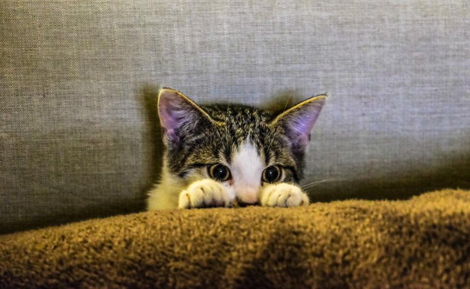 kitten animal pet paws scaredy cat couch sofa