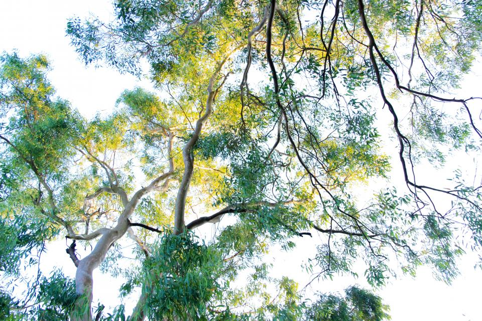 green trees plant nature branch sky