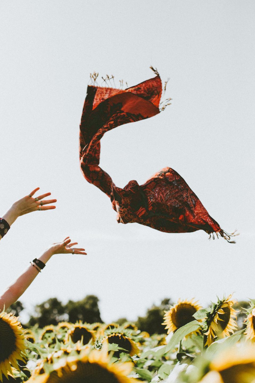 sunflower, yellow, petal, field, farm, garden, nature, plant, sky, hand, arm, shawl