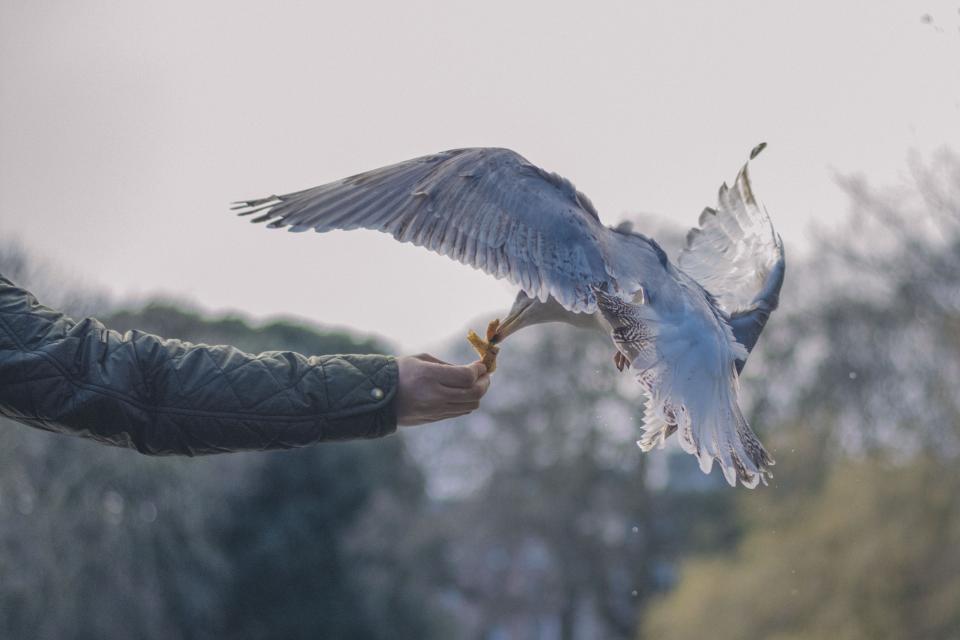 bird beak feather animal fly man hands food