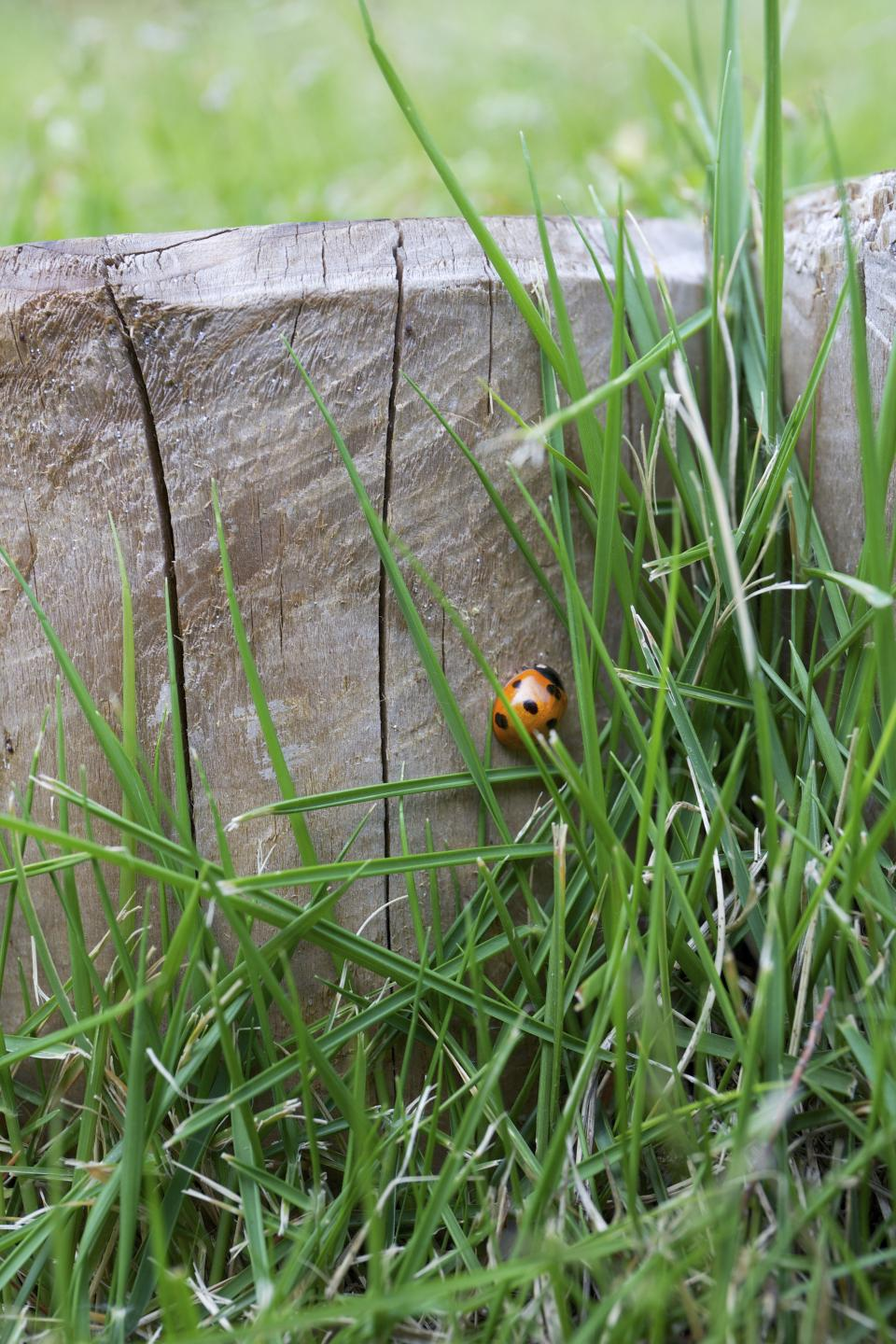 lady bug, insect, green, leaves, grass, spot