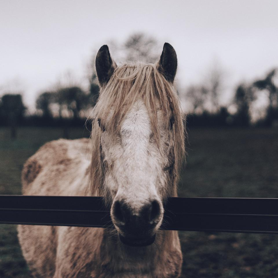 animal, horse, fence, grass, trees, farm, sky, bokeh, blur, clouds