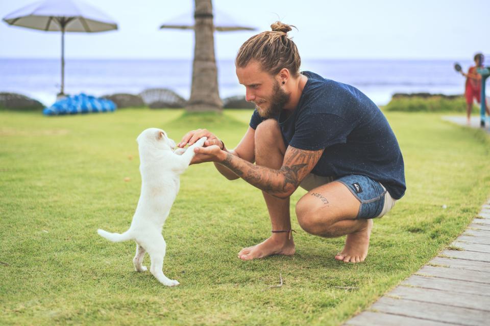 人、男の子、動物、犬、子犬、友人、遊び、ビーチ、海、空、傘、入れ墨、芸術、木、トランク