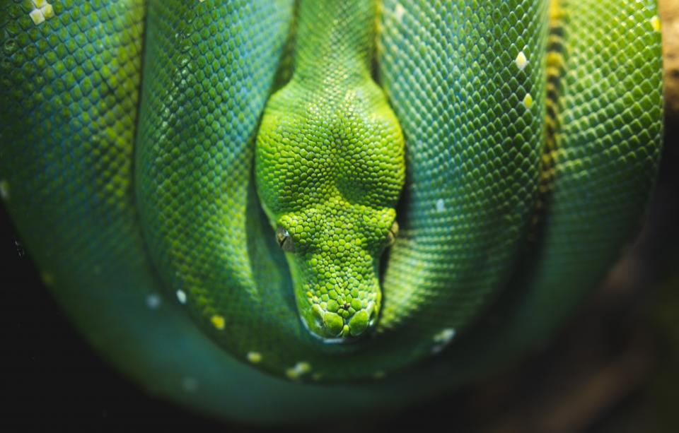green, snake, reptile, nature, wildlife, outdoor