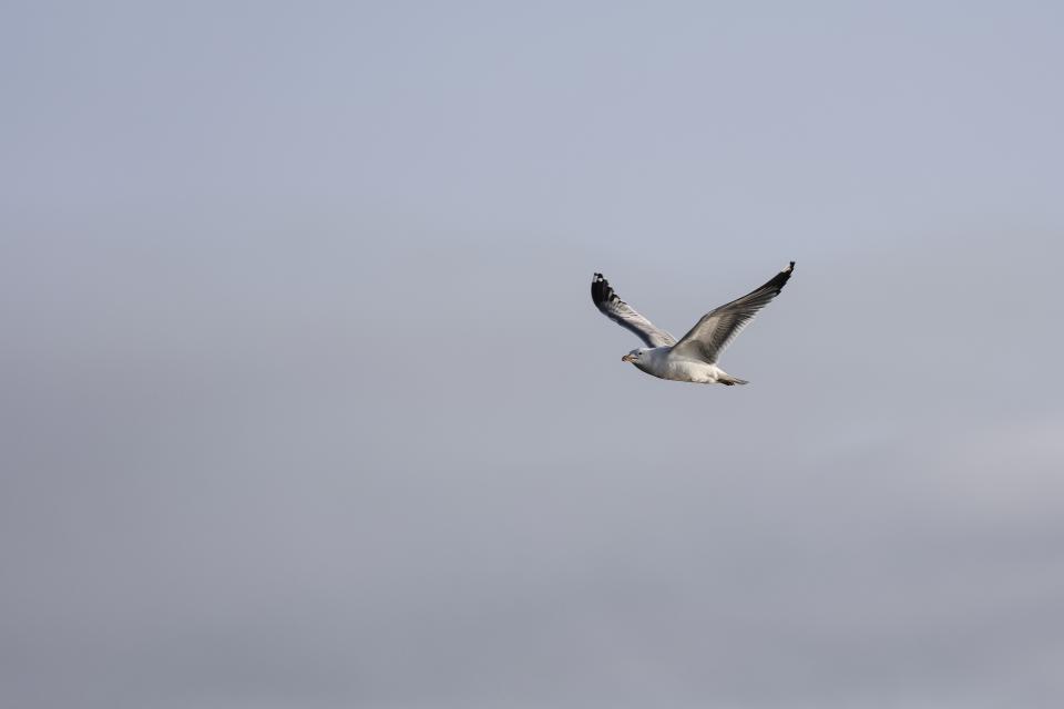 bird, animal, flying, sky
