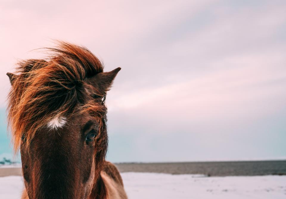 animals, horse, mane, beautiful, nature, sky, clouds, gradient, pink, blue, brown