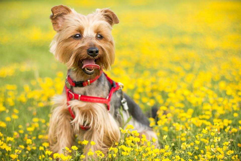 blur bokeh playground dog puppy animal pet yellow flower outdoor garden nature