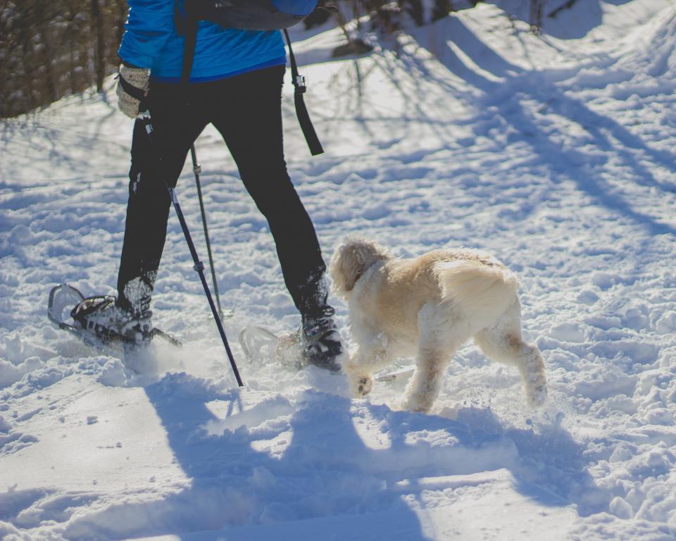 people, man, guy, snow, winter, snowshoe, footwear, travel, walk, hike, trek, adventure, white, dog, pet, animal, friend, outdoor, sunny, shadow