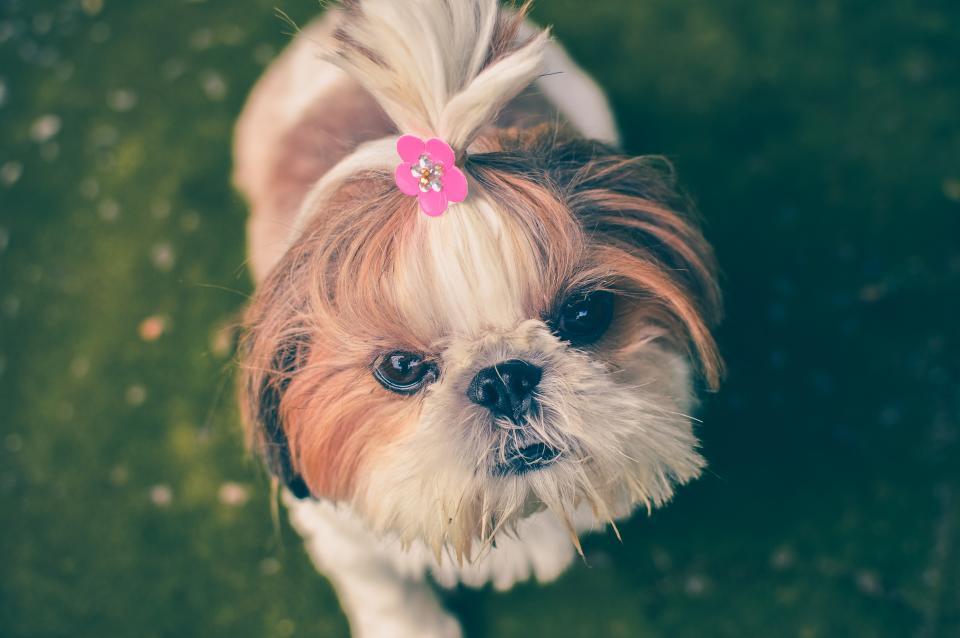 dog, pet, animals, cute