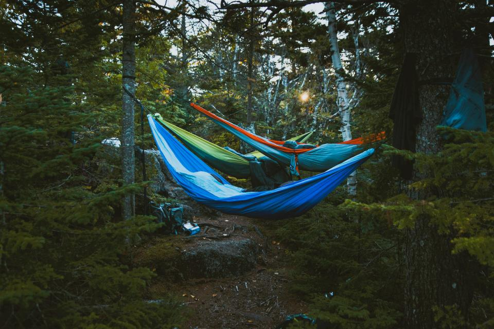 nature, landscape, trees, woods, forest, hammocks, camping, travel