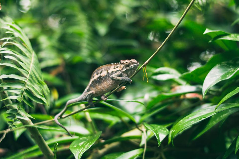 green, leaf, plant, nature, tree, frog, animal, reptile