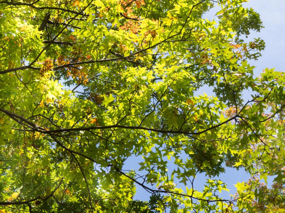 green trees plants nature branches leaves