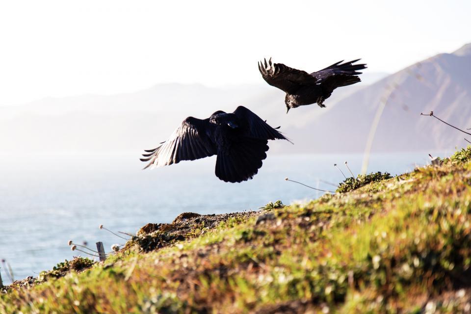 green, grass, blur, highland, mountain, sea, water, sunny, day, bird, animal, flying