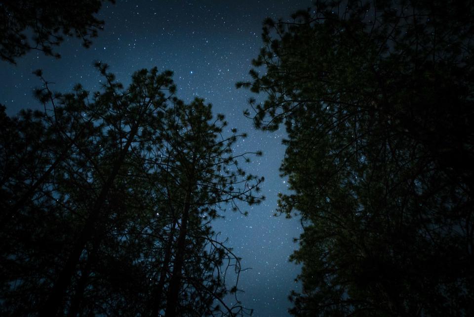 dark, night, stars, trees, stargazing, camping, woods, forest