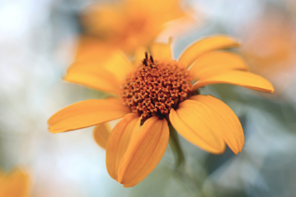 yellow flower nature summer bloom garden