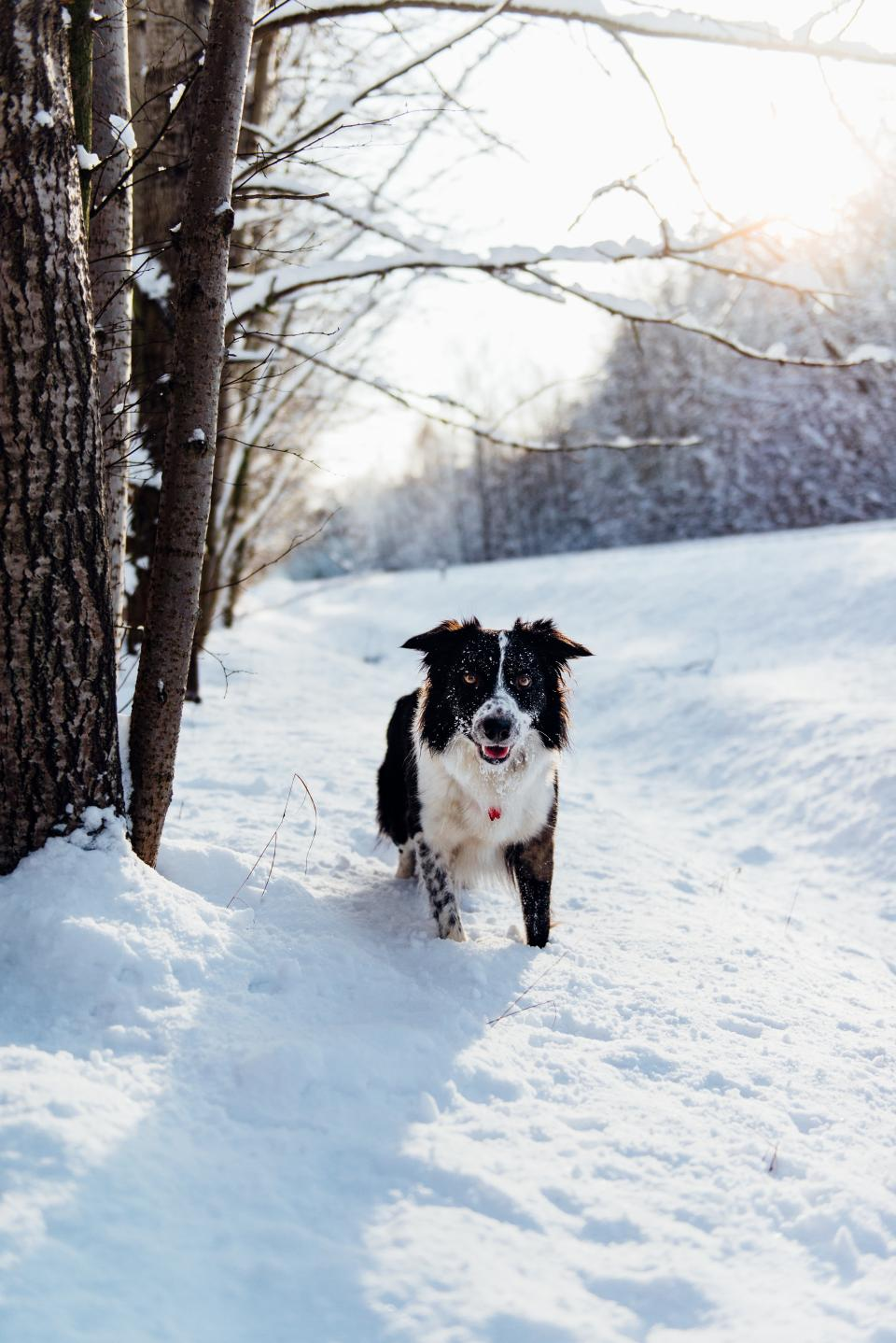 dog, animal, pet, puppy, snow, winter, trees, plants, nature, outdoor, sunny, day