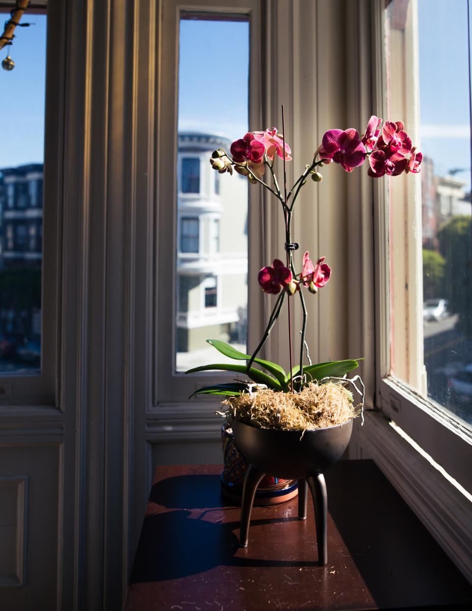orchids flower plant stem nature interior building window glass sky