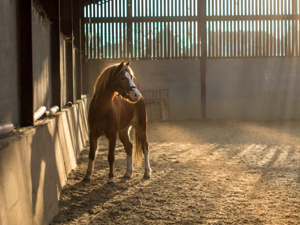horse, animal, pet, sunny, day, indoor, building