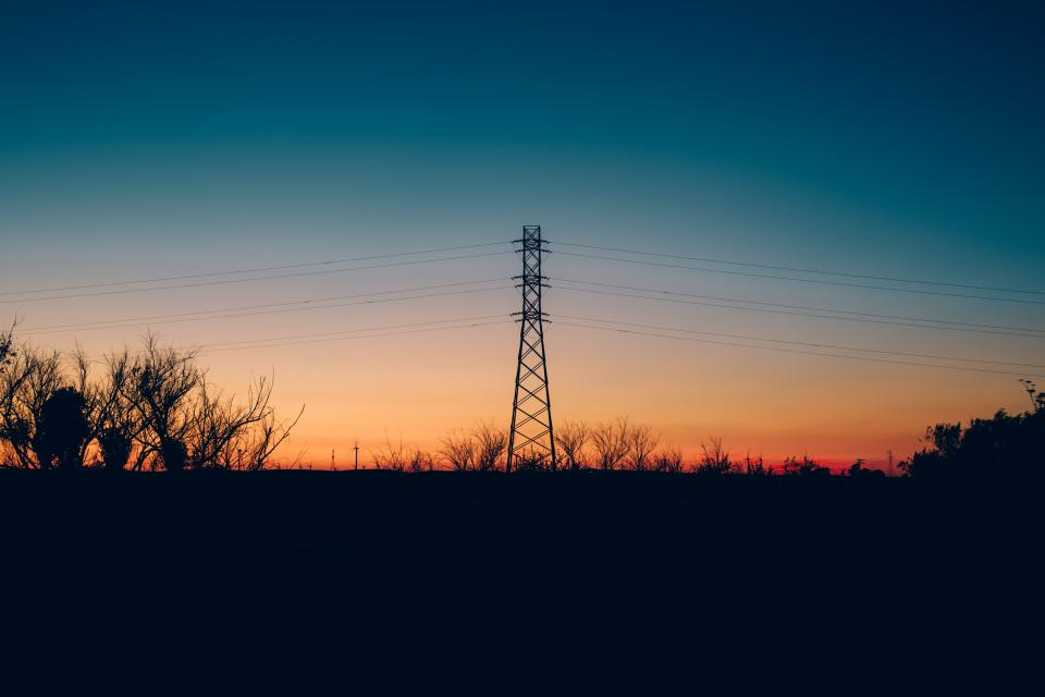 tree plant branch dark sunset sky silhouette transmission line electricity