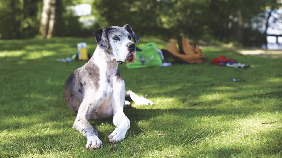 dog puppy animal grass happy grass camp park